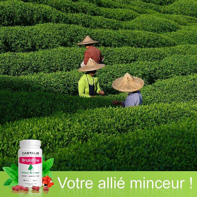 Castalis utilise du thé vert dans la composition de Brulafine
