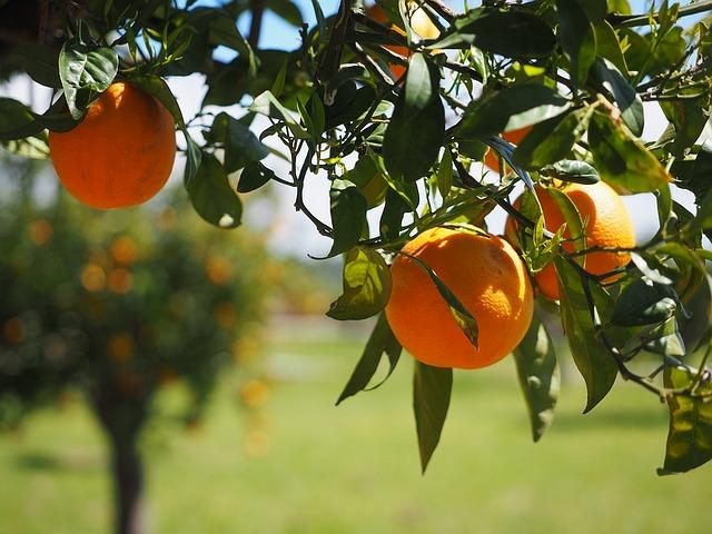 La vitamine ou acide ascorbique un indispensable pour l'organisme