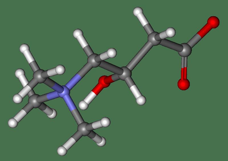 L-Carnitine favorise la perte de poids - BioHarmonie